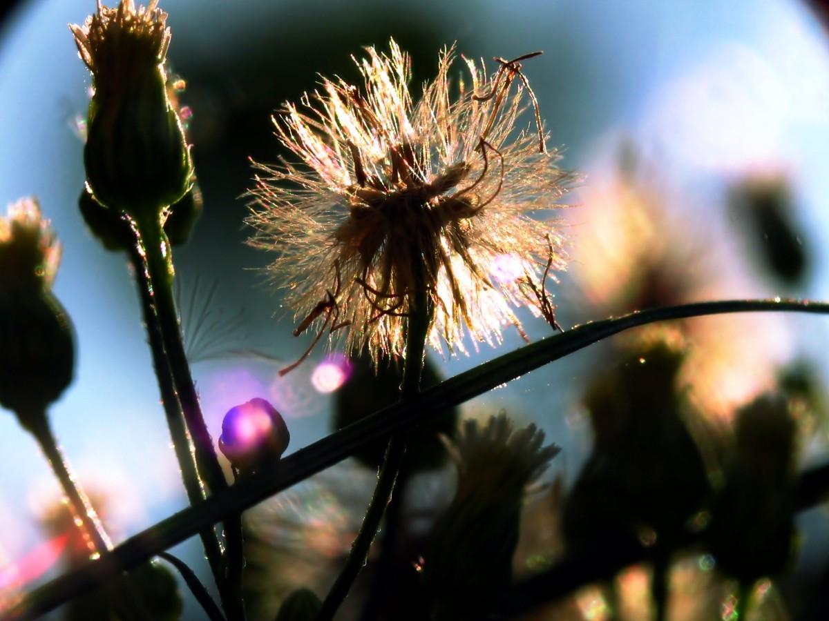 Kolektory słoneczne – ciepło za darmo